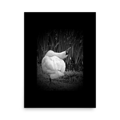 "Narcissist Swan is a grayscale in black Photo Art. Purchasable at matte, museum-quality posters. Poster dimensions: 18""x24"""