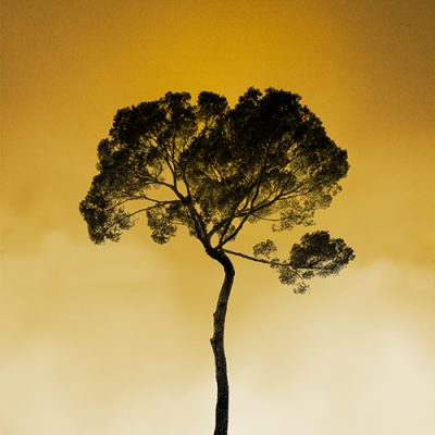 "Tree in the sky, sunrise. Photo Poster Art with a partly glossy, partly matte finish. Dimension: 18""x18"""